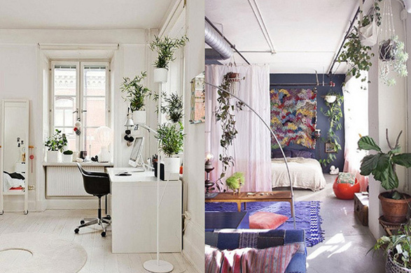 Inspiration: Decorating with Indoor Plants