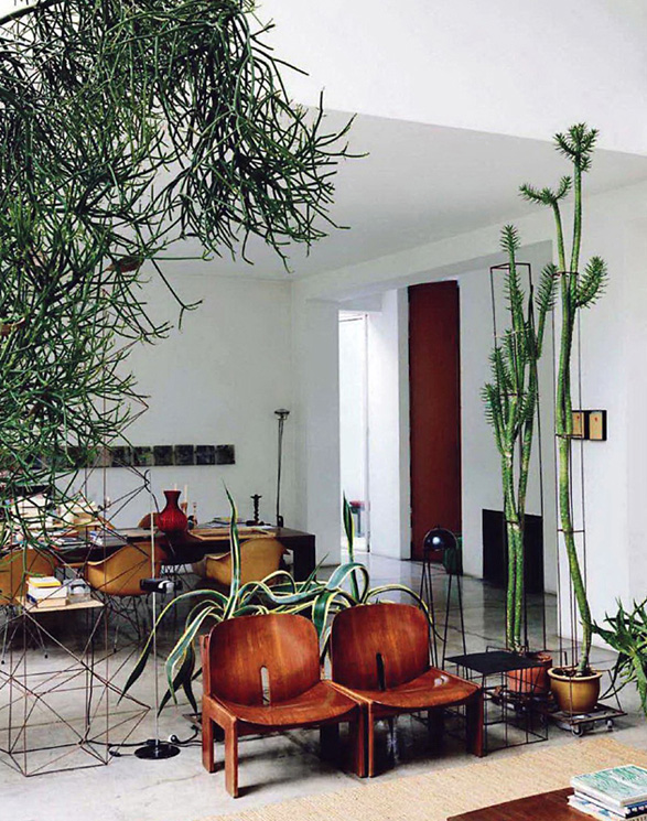 Inspiration Decorating With Indoor Plants Checks And Spots