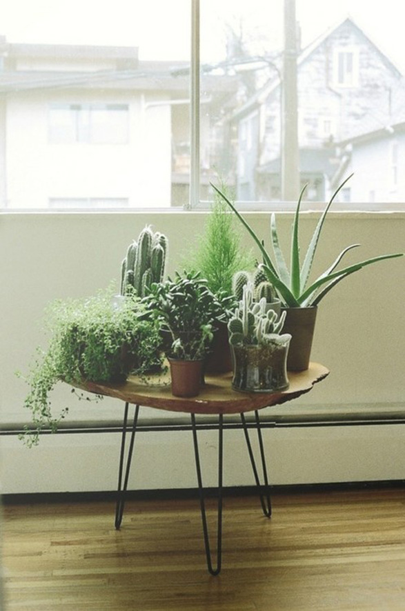 Home Decorating Idea Indoor Plants