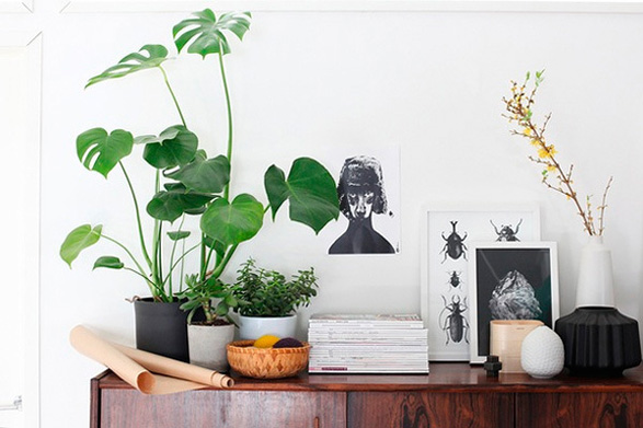Home Decorating Ideas Indoor Plants