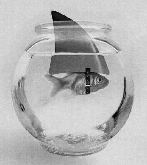 fish-in-fish-bowl